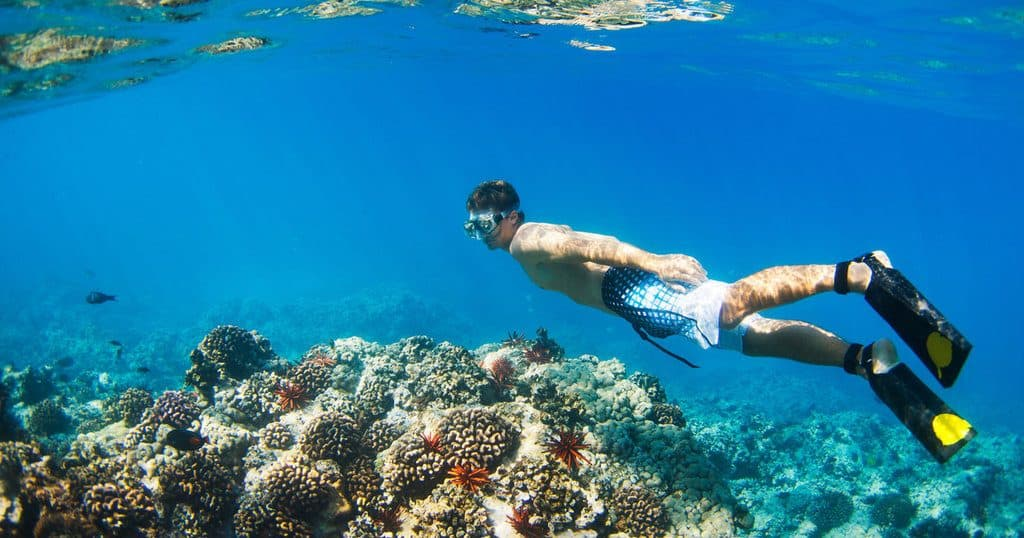 Best Snorkeling Beaches In Oahu Snorkels And Fins