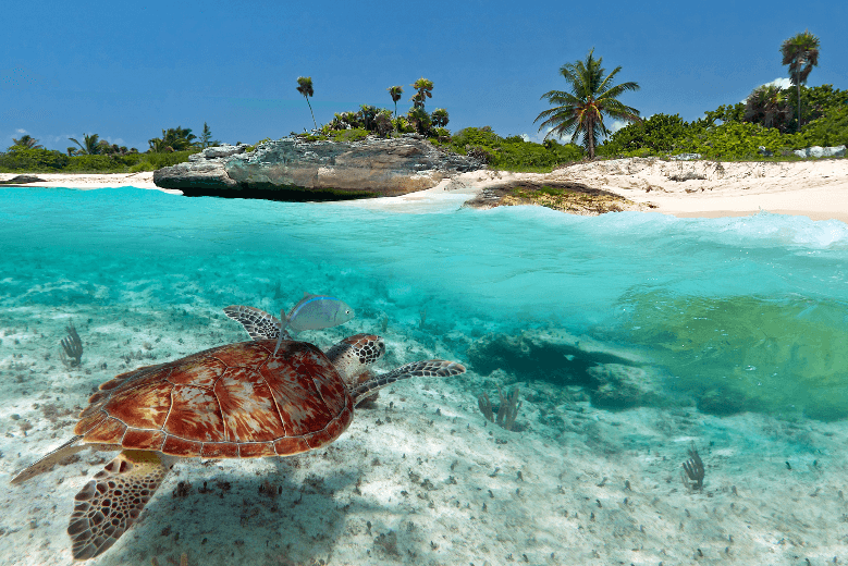 mexico turtle in the ocean