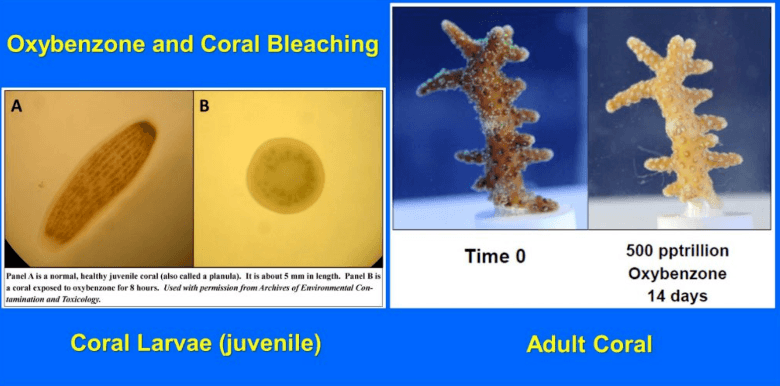 oxybenzone and coral bleaching