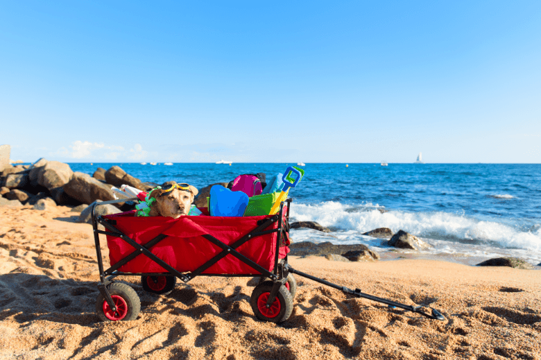 Red beach cart with luggage and funny dog with goggles